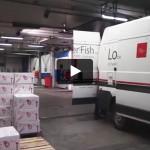 Bedrijfsvideo Lobster Fish uit Deerlijk